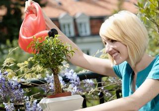 Trucos para mantener tus plantas sanas y bonitas