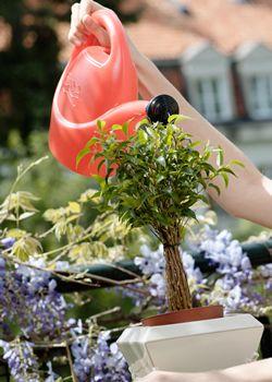 Trucos para mantener tus plantas sanas y bonitas - Vitaminas para plantas de interior ...