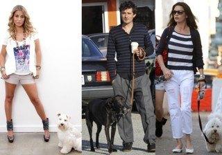 Los perros de los famosos