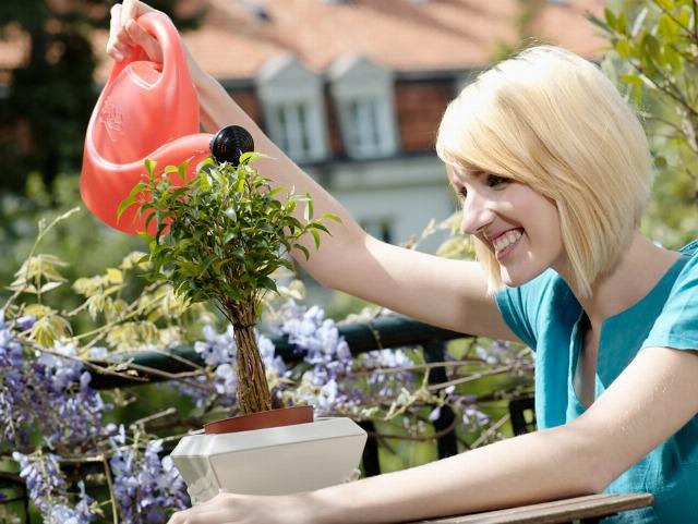 Foto Trucos para mantener las plantas sanas