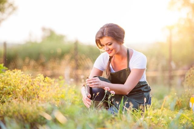 Foto Trucos para mantener las plantas bonitas