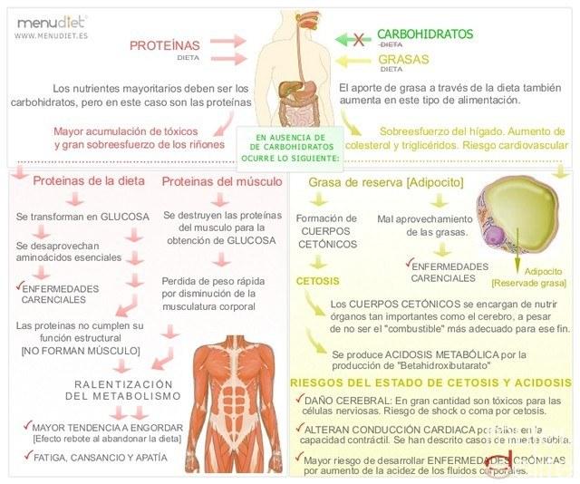Foto Proceso corporal en una dieta proteica o baja en hidratos de carbono