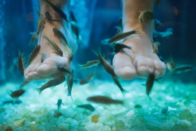 Foto La Ictioterapia, el tratamiento más novedoso para embellecer los pies