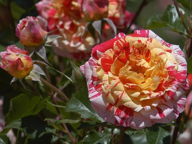 Foto Cómo elegir las flores para tu jardín o terraza