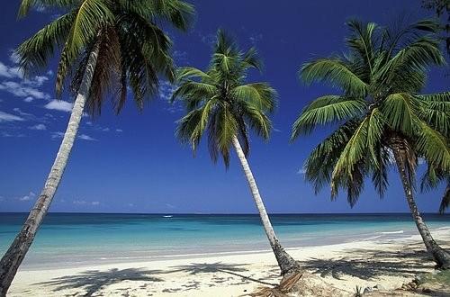 Foto Playa Palm Beach en El Caribe