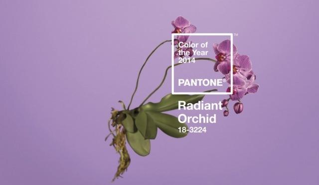 Foto Orquídea Radiante, el color del año 2014
