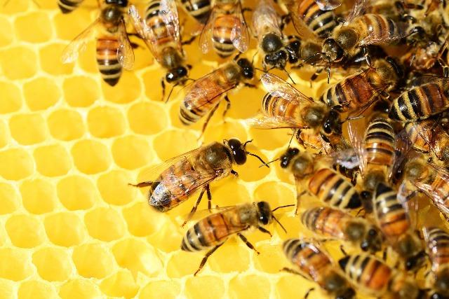 Foto Proceso de elaboración de la miel