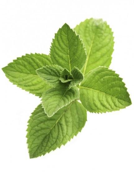 Foto La Stevia, un edulcorante natural con propiedades antioxidantes