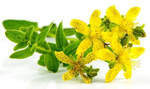 Beneficios y propiedades de las flores de hipérico