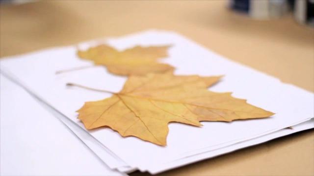 Foto Paso 1 etiquetas decorativas con hojas secas para el otoño