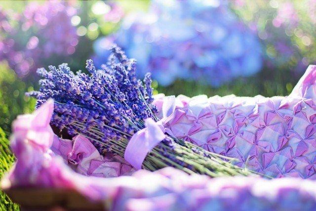 Foto El aroma a lavanda, un clásico que no pasa de moda