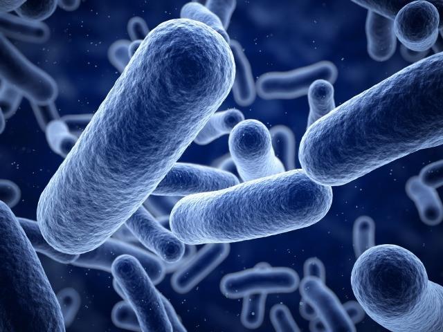 Foto El poder de los probióticos en la curación de enfermedades