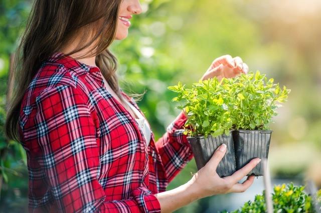 Foto Decálogo para cuidar las plantas en verano
