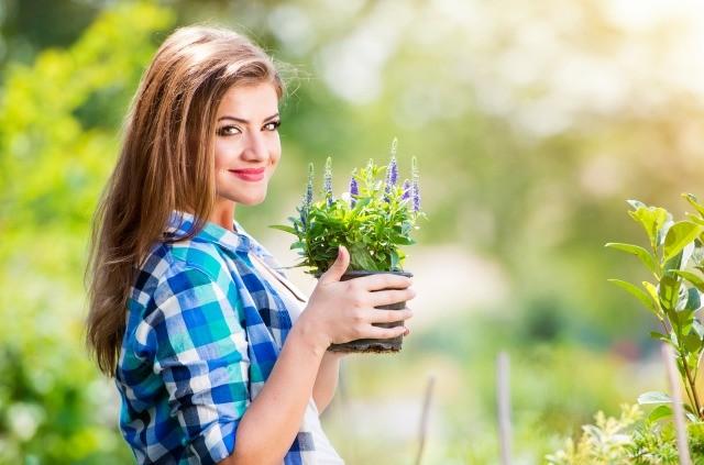 Foto La luz y el agua en su justa medida son los elementos principales para cuidar las plantas en verano