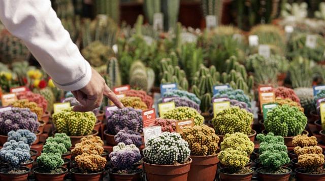 Foto Según el Feng Shui, una simple planta situada en un cuarto puede mejorar nuestra vida