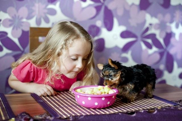Los mitos sobre la alimentación de las mascotas