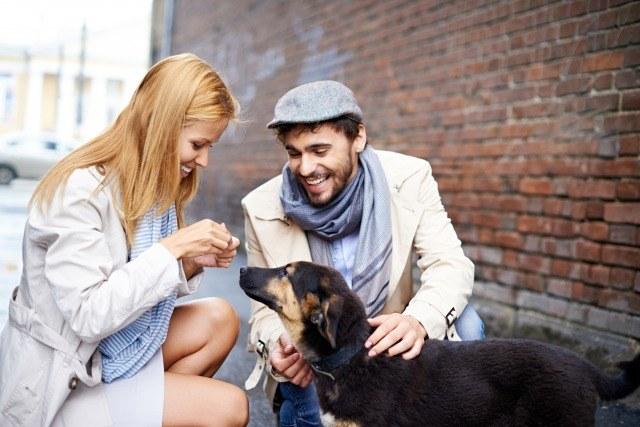 Foto Los carbohidratos pueden contribuir a controlar el peso de los perros
