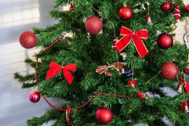 Foto Cuidados especiales para las plantas de Navidad
