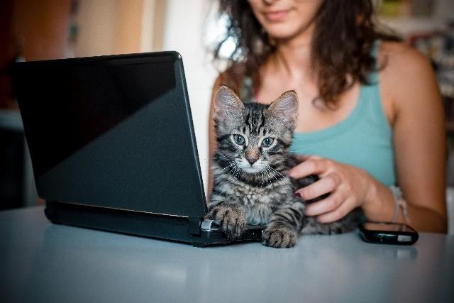 Foto Los gatos son más independientes que los perros