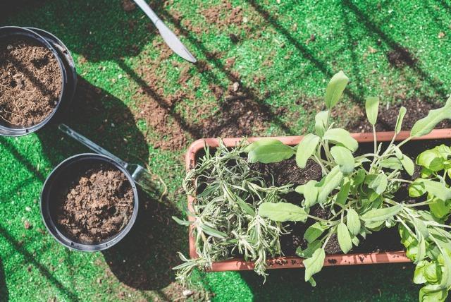 Foto Cómo elegir la maceta adecuada para tus plantas