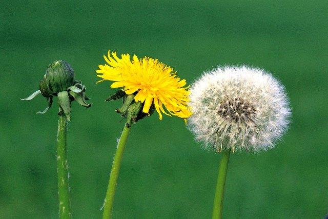 Foto Las claves para prevenir y combatir las alergias al polen